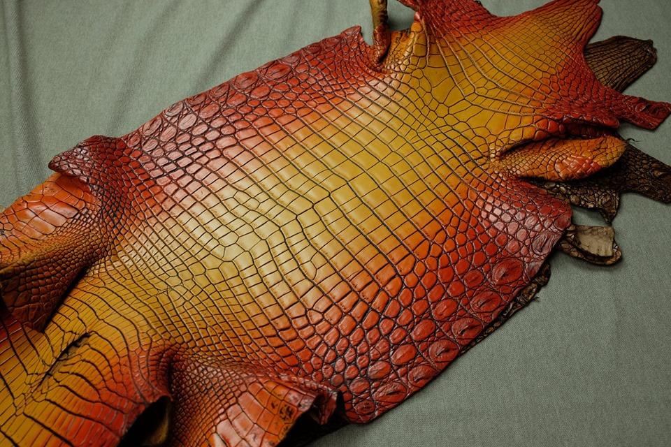 Tại sao đồ da cá sấu lại được ưu chuộng và quý nhất thế giới